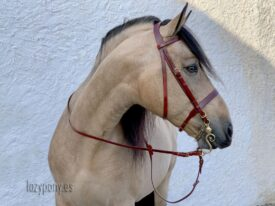 Brown leather hunter bridle