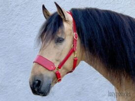 Red leather horse halter