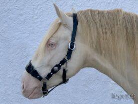 Black baroque horse halter