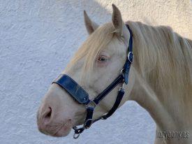 Blue leather horse halter