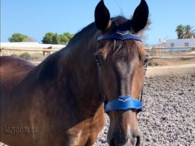 fancy browband